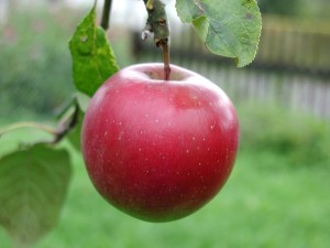 grand, pomme rouge
