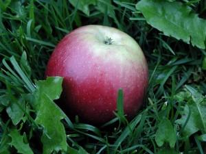 detalj, apple, gress
