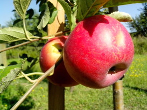 organic, red apple, fruit