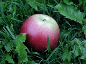 červené, sladké, jablko, tráva