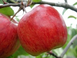 deux, pommes rouges