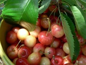 bigarreaus, fruit