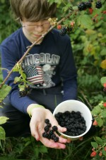 delicious, blackberries