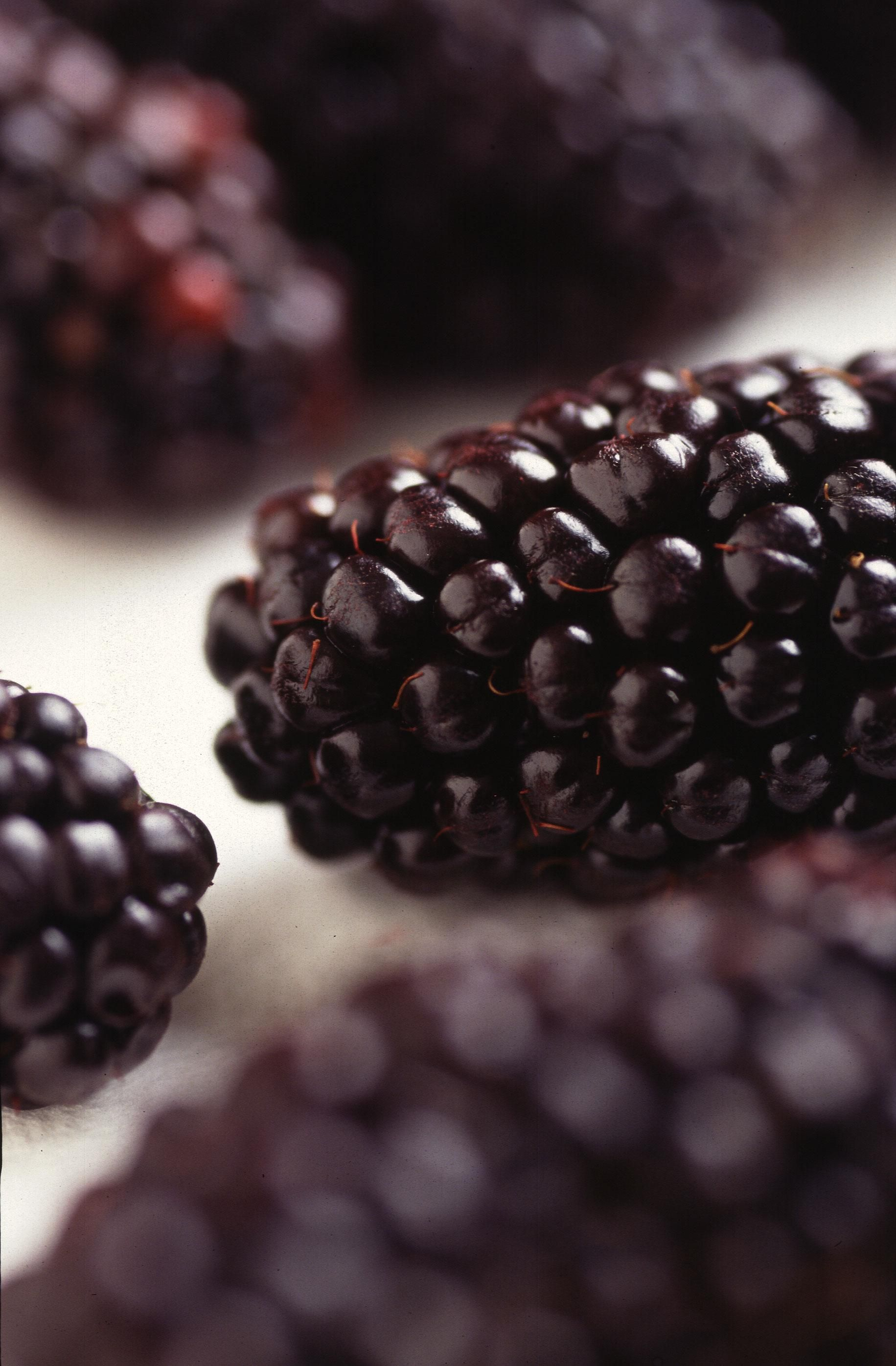 Free Picture Genetically Modified Blackberries