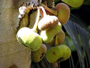 figs, fruit