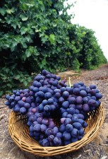 fresh, purple, grapes