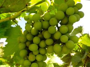 green, grape, fruit, close