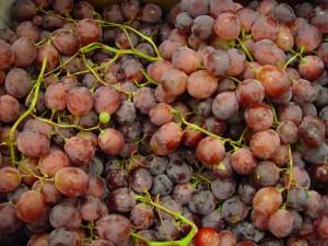 rød, globe, druer