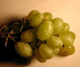 vine, grape