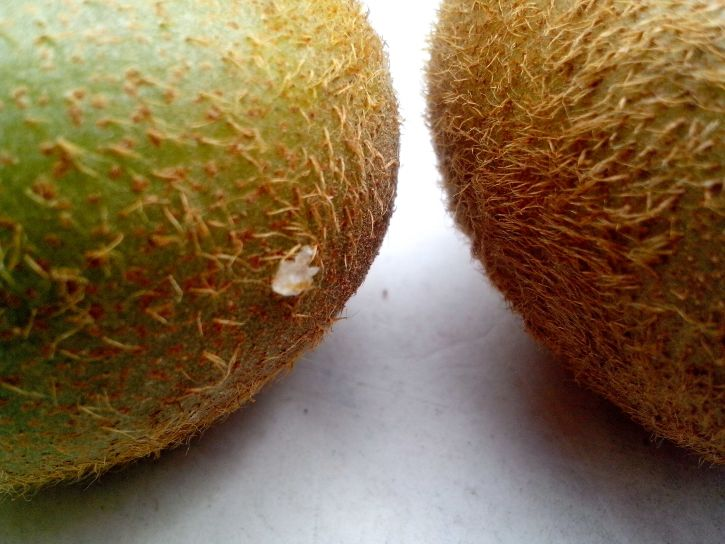 detailed, picture, hairs, kiwi, fruit