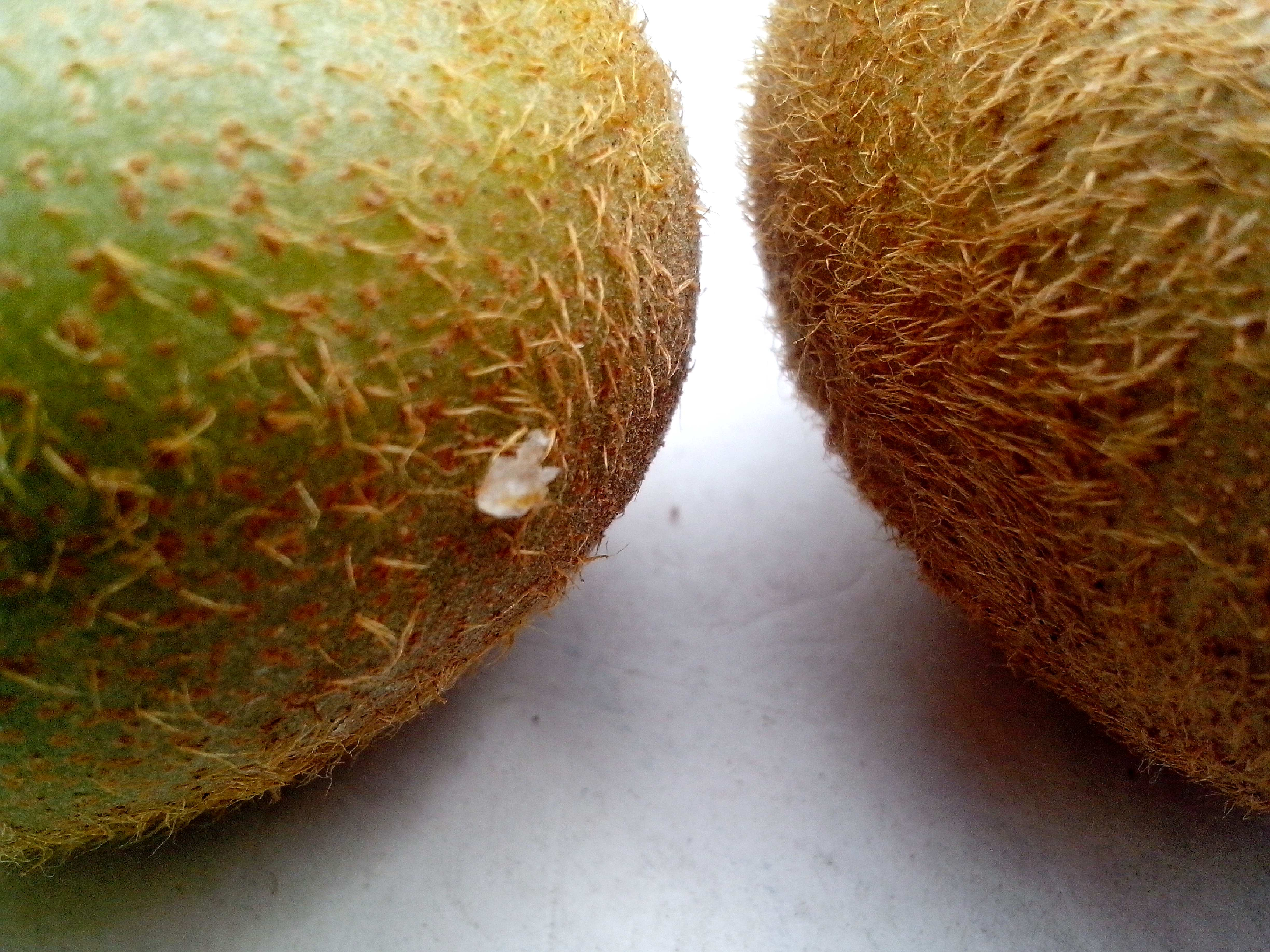Free photograph; detailed, picture, hairs, kiwi, fruit