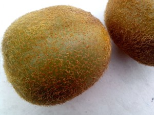 kiwi, fruits, fond blanc