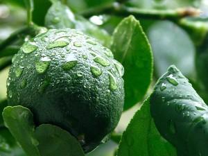 vert, meyer, citron