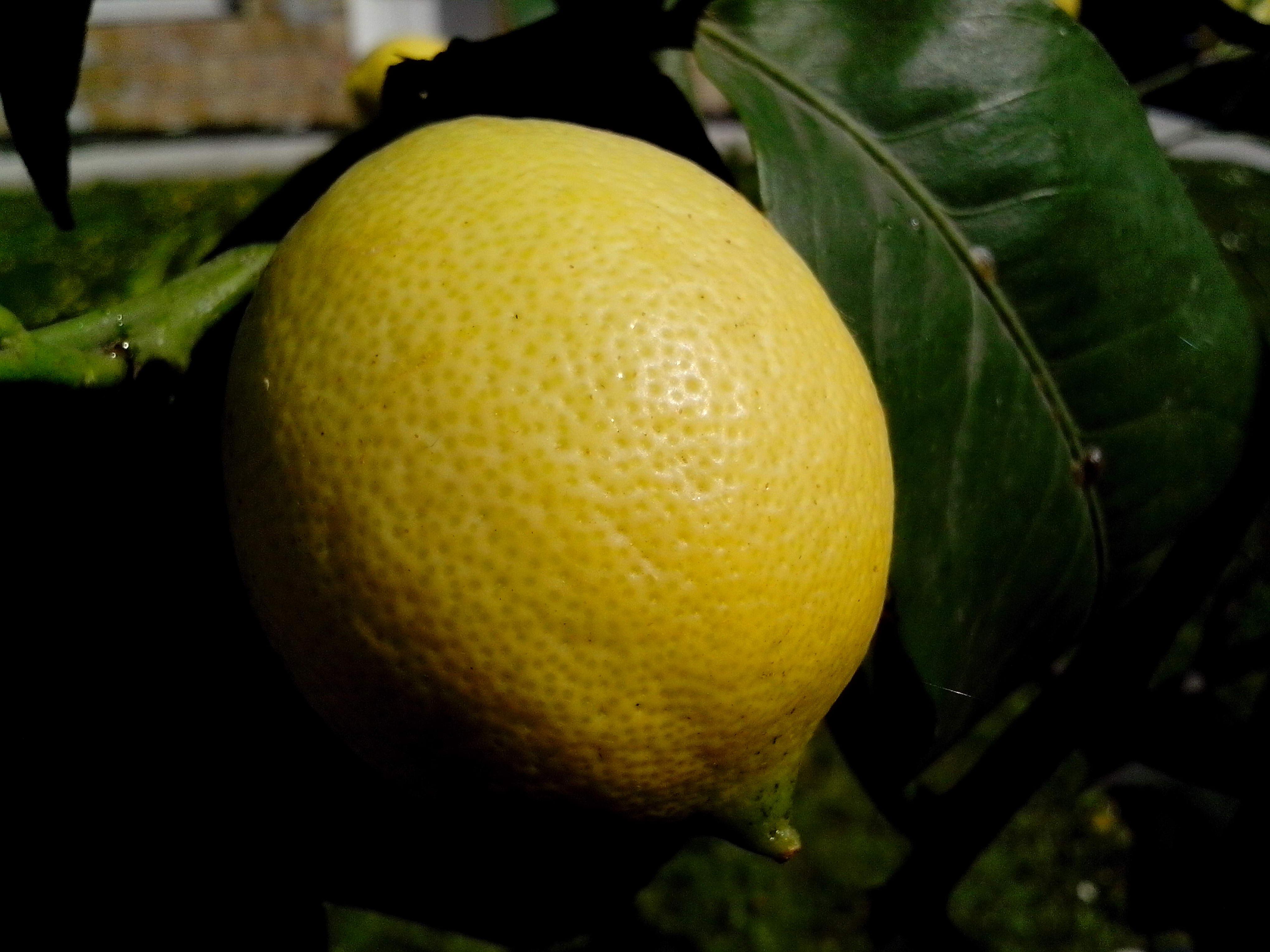 Free photograph; organic, lemon, fruit