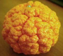 crépus, mandarine, fruits