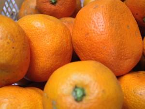 맛 있는, 일본, 사쓰마, 오렌지, 과일