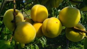de près, de l'agriculture biologique, pêche, fruits