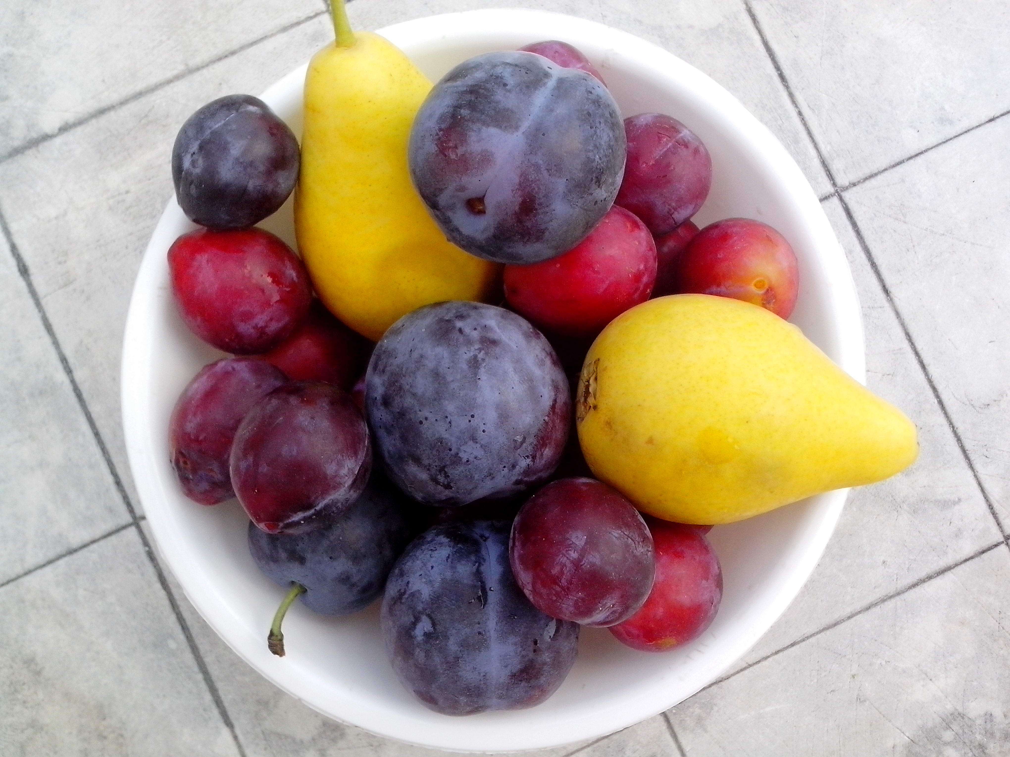 Free photograph; ripe, pears, blue, red, plums, bowl