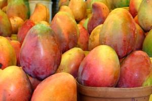 sud, Afriques, manguiers, await, traitement, frais, coupés, fruits, plante, expédition, détaillant
