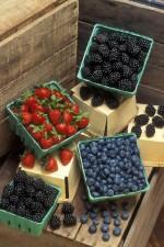 fraises, bleuets, mûres