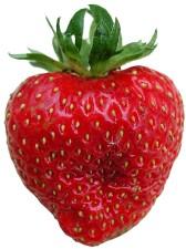 truskawka, owoce