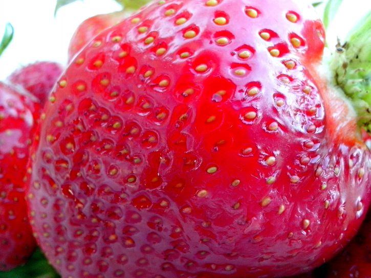 strawberry, fruit, close, macro