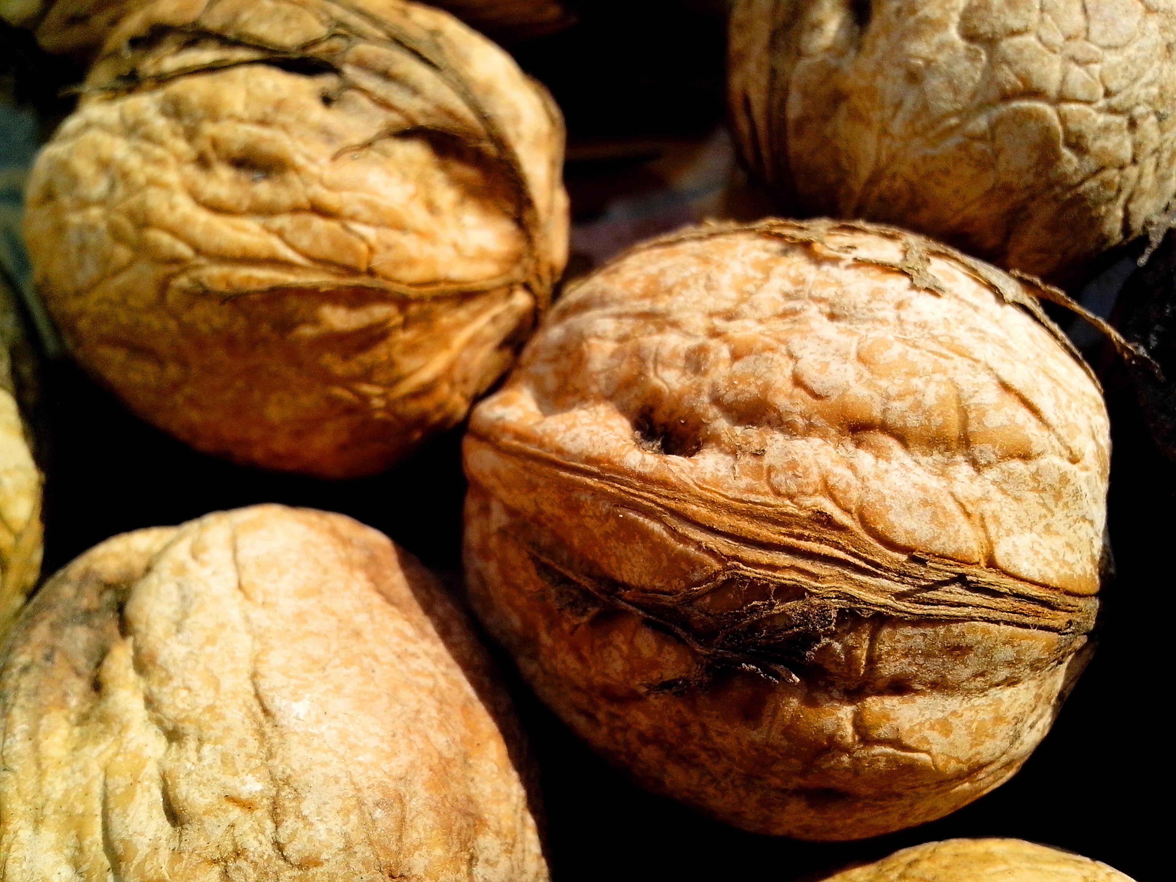 Free photograph; fruits, walnuts