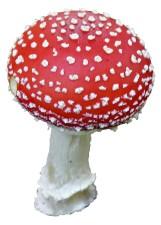 amanita, muscaria, mushroom