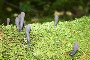 les champignons, les journaux, la mousse