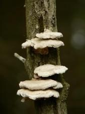 champignons, plantes, arbres