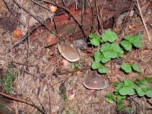 houby, strom, Les, pozemní, tráva