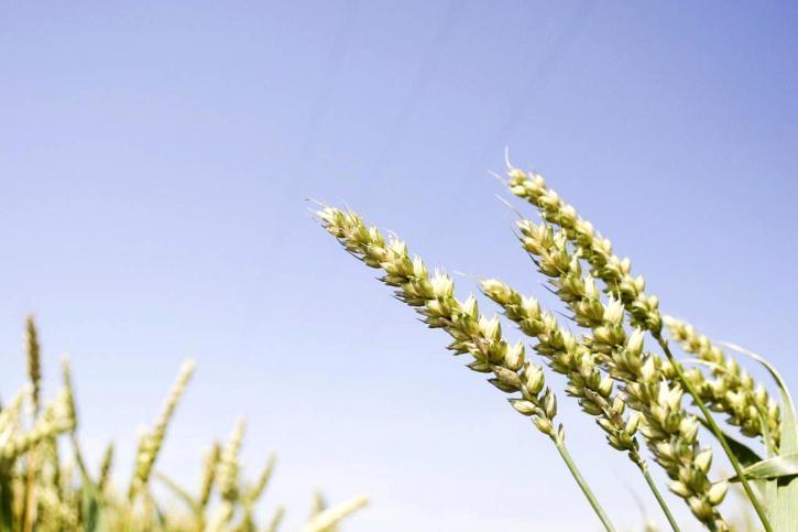 grain, plante, à proximité