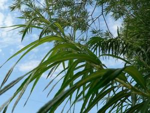 vert, plantes, bleu, ciel