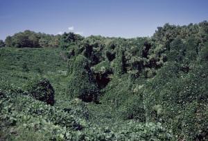 kudzu พืช ท้องถิ่น กระจาย จอร์เจีย สหรัฐ