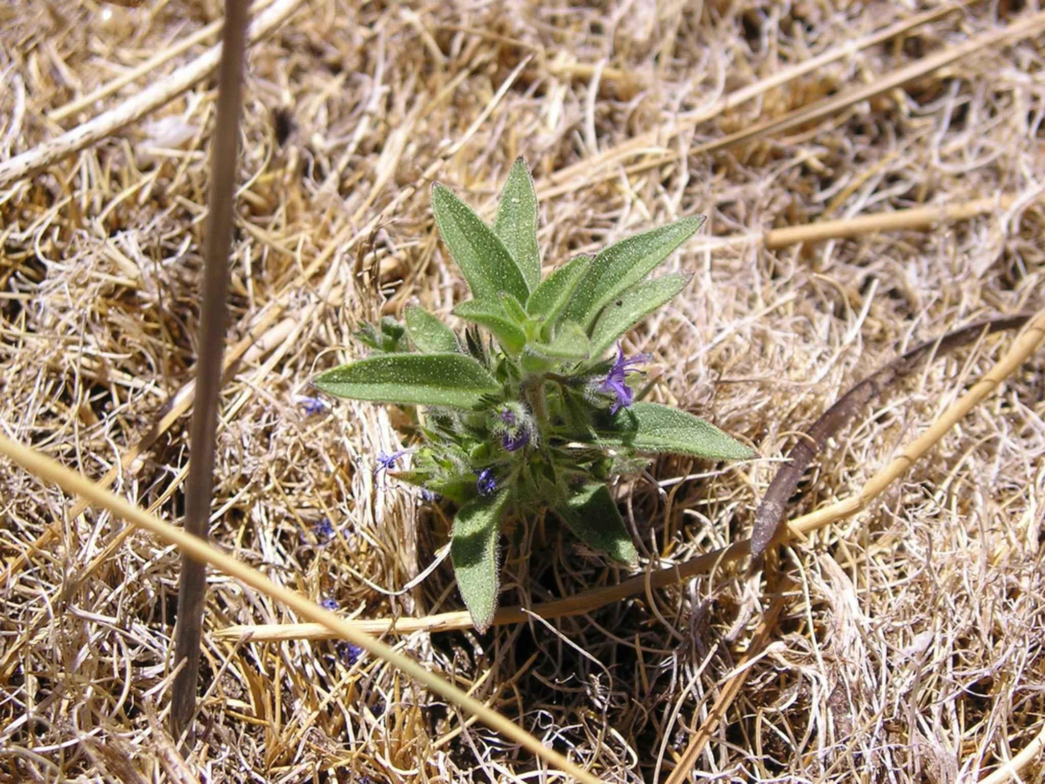 Image Libre Lac Bluecurls Plantes Fleurs