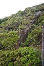 plant, overgrown, steps