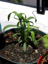 рослини трави