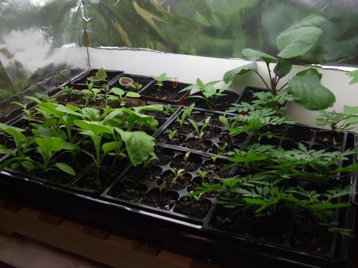 Kasvien kasvitieteellinen, Puutarha