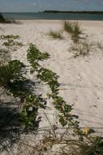ferrovia, videira, plantas, areia branca
