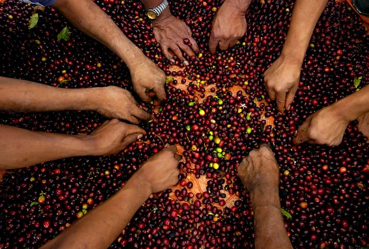 agricultural, programs, projects, assist, coffee, farmers, growing, good, harvest