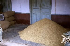 commune, la méthode, le riz, le stockage, le Gujarat, en Inde, villages