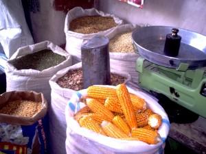 corn, seeds