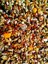 seeds, various, grains