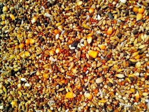 seeds, various, grains, corn, rice, sunflower, rapeseed