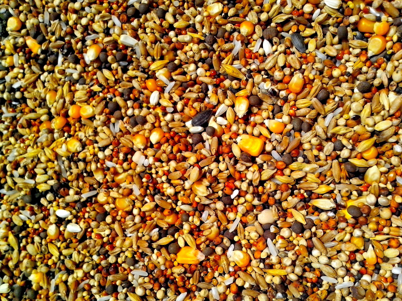 Free photograph; seeds, various, grains, corn, rice, sunflower, rapeseed