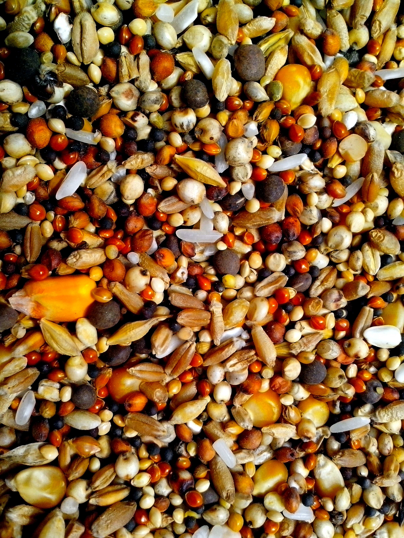 Free photograph; seeds, various, grains