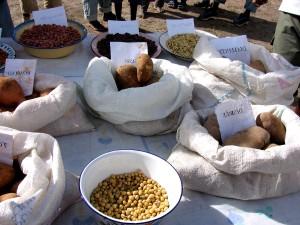 diverses, graines, sacs, étiquettes, papiers