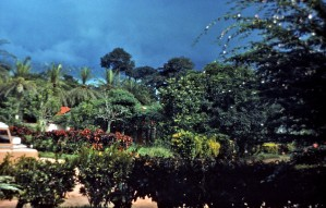 African, trees, flora