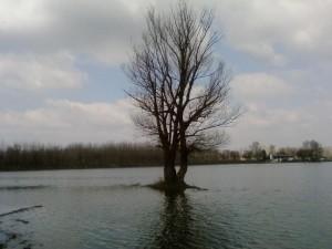 một mình, cây, bão