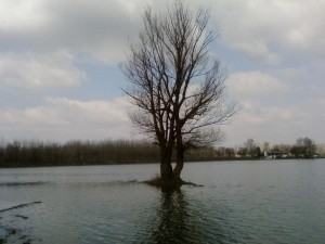 alone, tree, storm